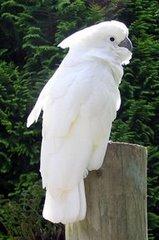 Burung Siapa